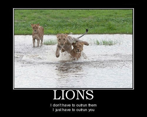 lions hungry wtf funny animals