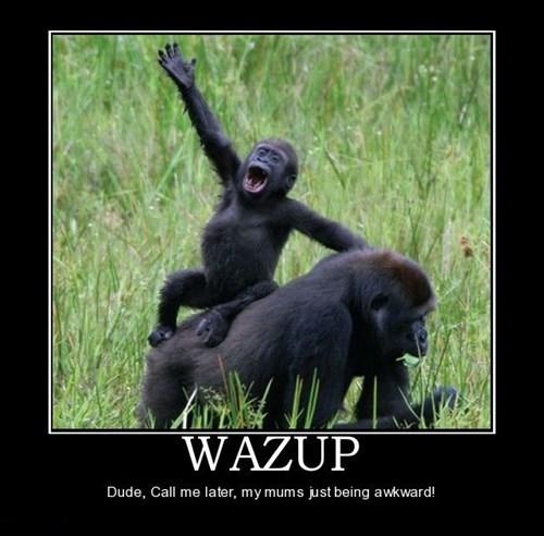 monkeys kids funny animals parents - 7774028288