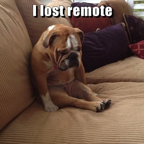remote,bulldog,lost