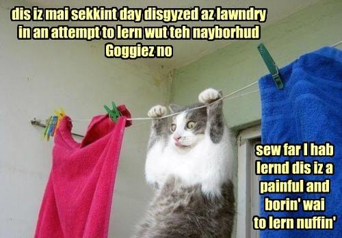 dis iz mai sekkint day disgyzed az lawndry in an attempt to lern wut teh nayborhud Goggiez no sew far I hab lernd dis iz a painful and borin' wai to lern nuffin'