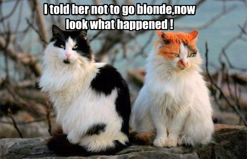 I told her not to go blonde,now look what happened !