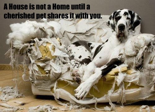A House is not a Home until a cherished pet shares it with you.