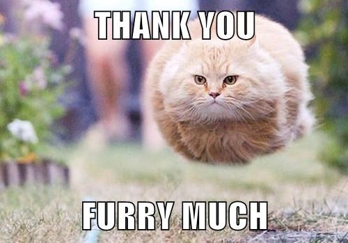 Thank You Furry Much Cheezburger Funny Memes Funny Pictures