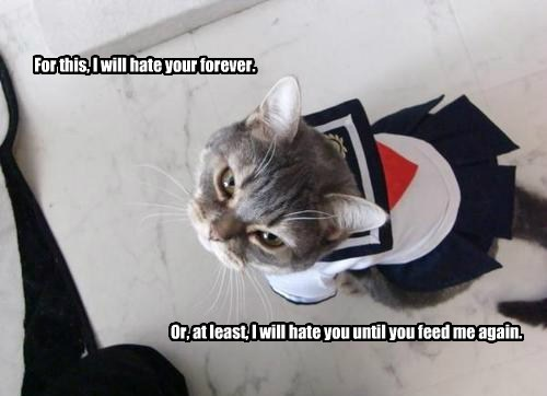 For this, I will hate your forever. Or, at least, I will hate you until you feed me again.
