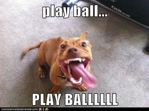 teeth ball play dogs