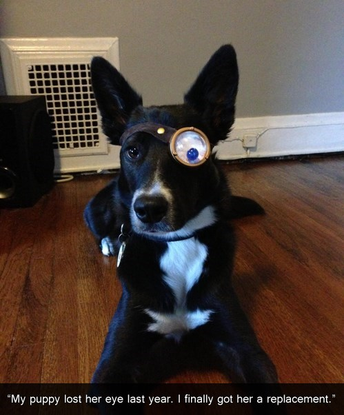 Harry Potter,mad eye moody,dogs