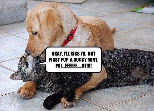 cat secret KISS - 7776367104