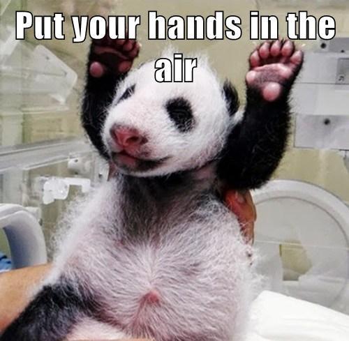 panda cub cute bear - 7776668672