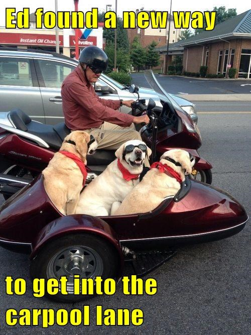 goggles side car motorcycle dogs