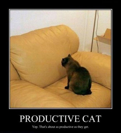 cat funny productive animals - 7777220352