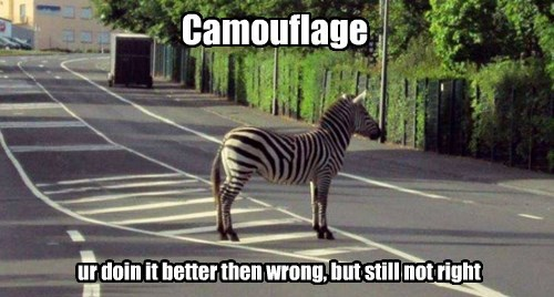 zebra,stripes,camouflage