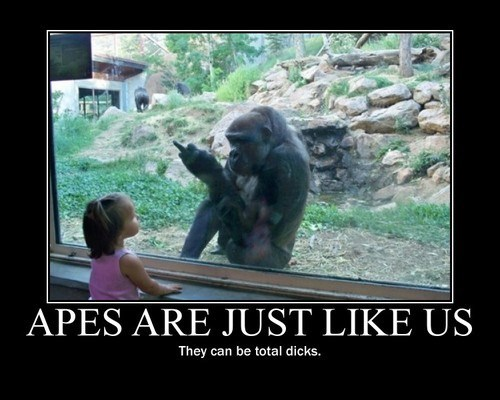 humans apes jerks funny