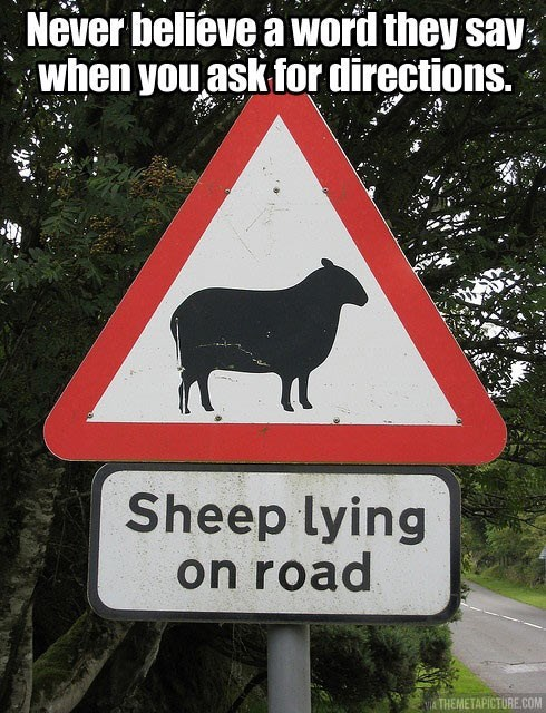 lay,puns,sheep,lie