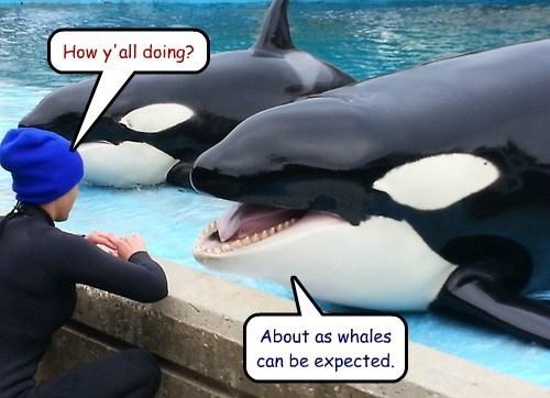 pun whale - 7777586688