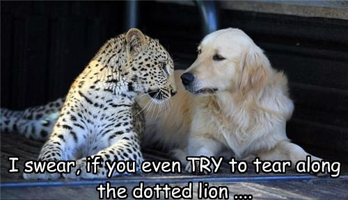 cheetah interspecies friendship dogs - 7777688064