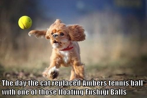 The day the cat replaced Ambers tennis ball with one of those floating Fushigi Balls