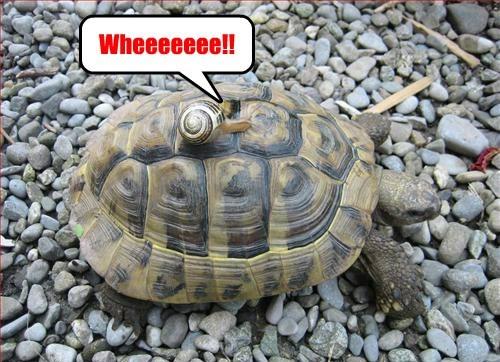 interspecies friendship turtle snail - 7778455296