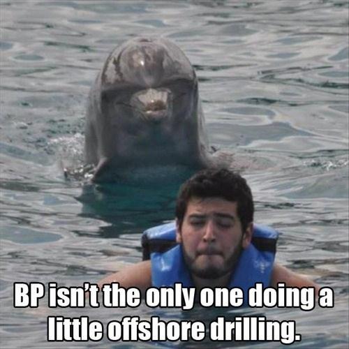 dolphin ocean swimming - 7778578432