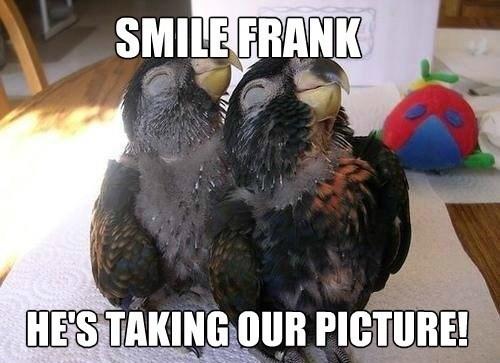 smiling,birds
