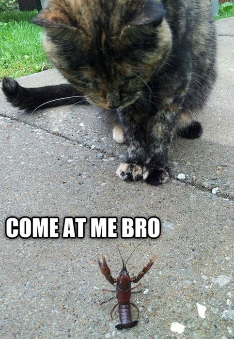 come at me bro