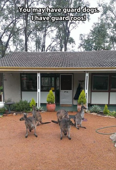 security kangaroos australia