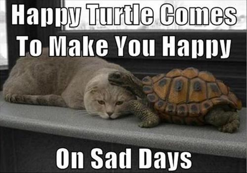 cheer up interspecies friendship turtle sad days