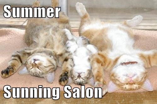 Summer Sunning Salon