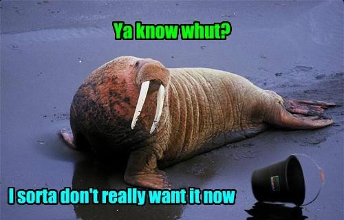 bucket walrus - 7778641152