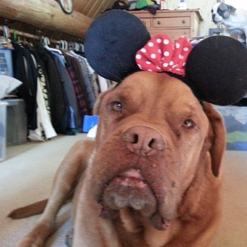 He Wants to Know Where HIS Mouse Ears Are!