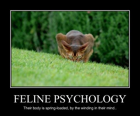 FELINE PSYCHOLOGY Their body is spring-loaded, by the winding in their mind..