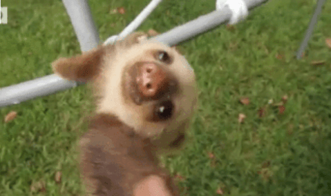 cute gifs of funny animals being derps and acting silly