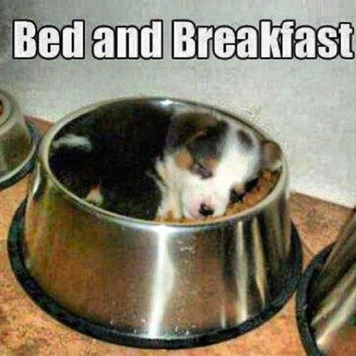 breakfast puppy cute food - 7778885632
