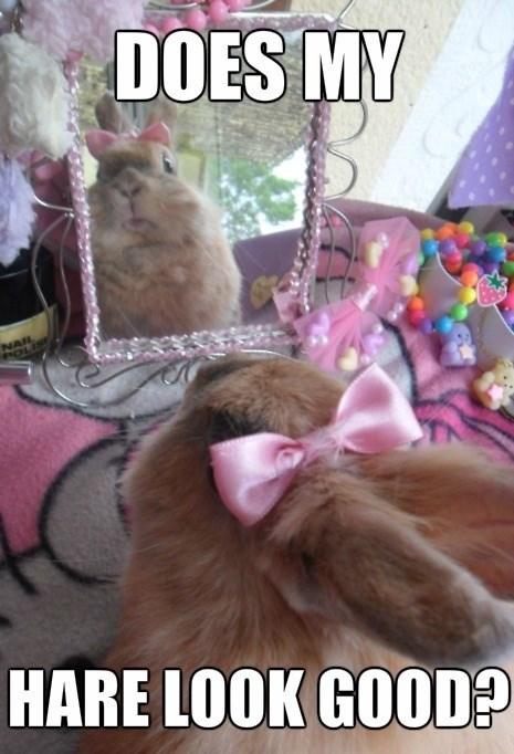 hair fashion pun rabbit bunny - 7778902784