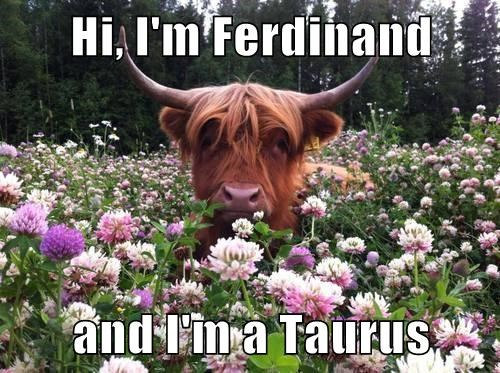 taurus trot cattle bull flowers - 7778908672
