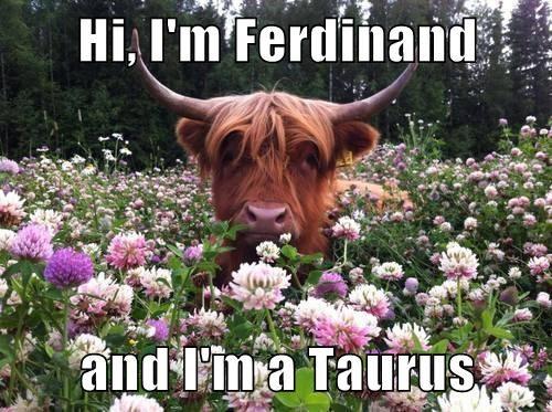 taurus trot cattle bull flowers - 7778908672