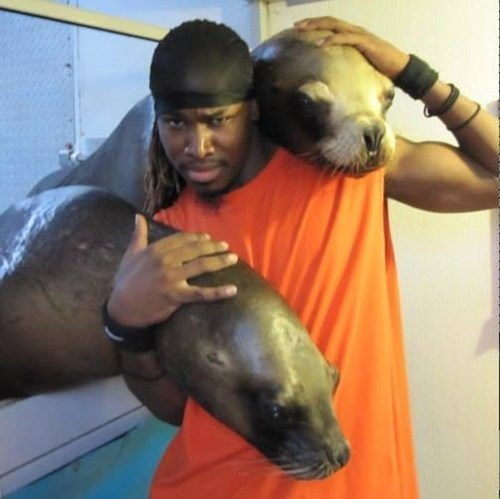 A True Seal Fan