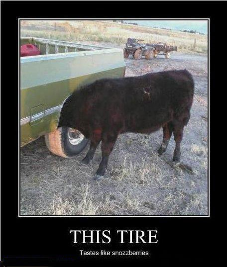cow tire delicious funny animals - 7779107072