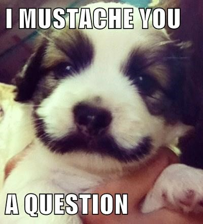 mustache beard puppy cute - 7779108608