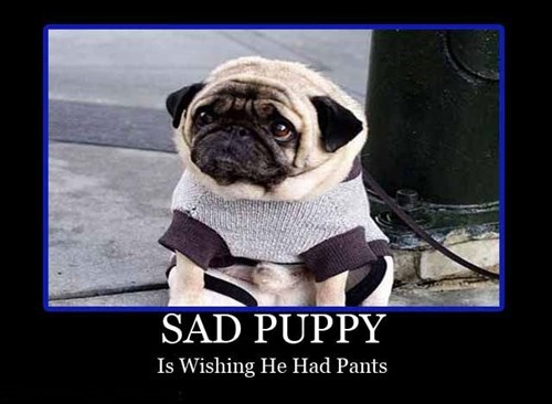 dogs wtf pants funny - 7779111168