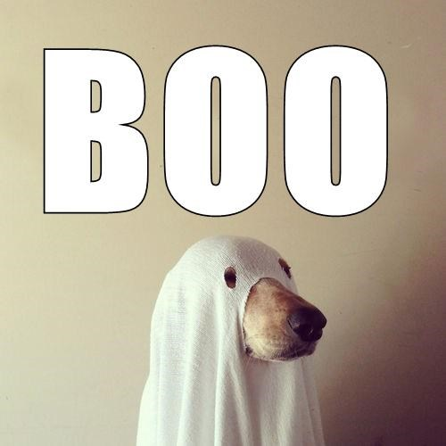 costume dogs halloween ghosts - 7779127296