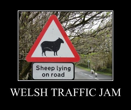 Traffic Jam,Wales,sheep,funny