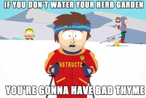 pun water thyme - 7779488512