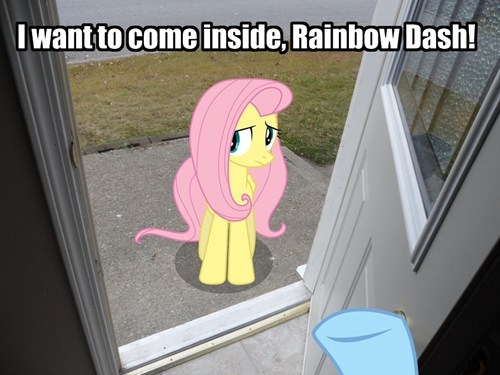 punctuation,fluttershy,rainbow dash