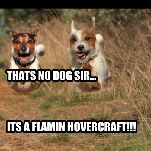 dogs,no sir,hover craft