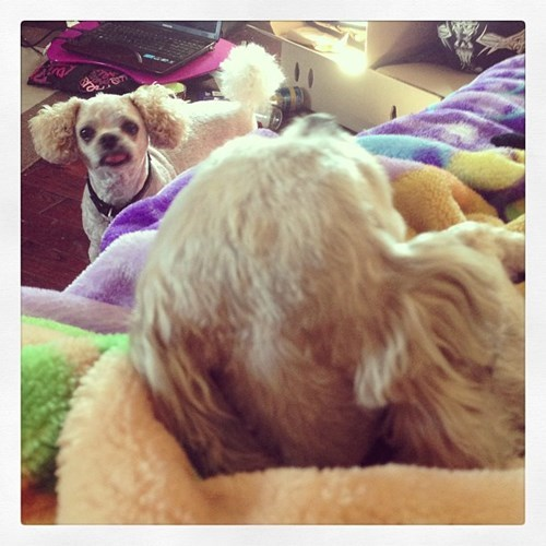 photobomb dogs cute funny - 7780571904