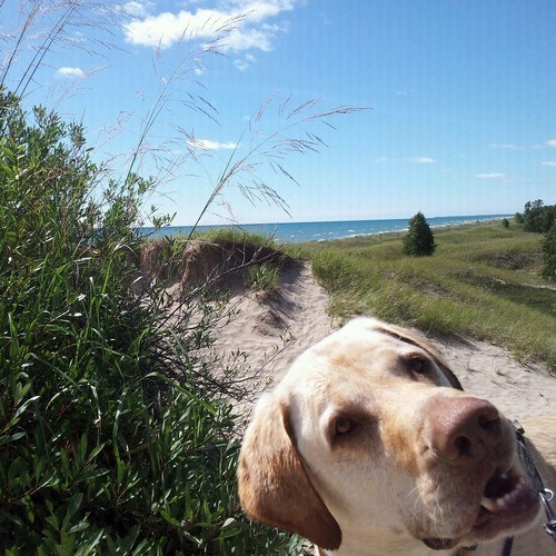 photobomb dogs cute funny - 7780573696