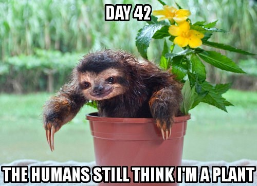 they still do not realize,flowers,sloths,animals