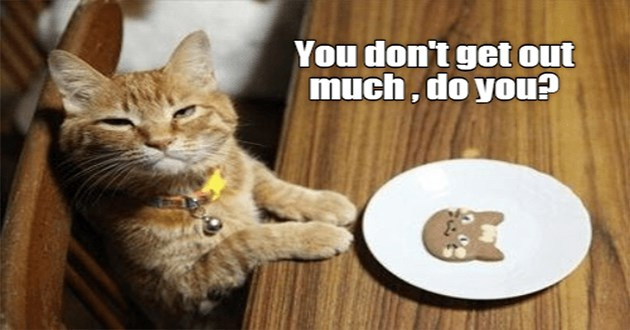 lolcats of the funniest cat memes