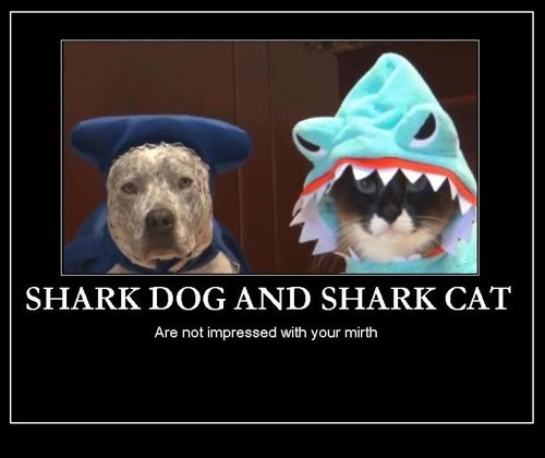 dogs sharks Cats funny animals - 7780899328