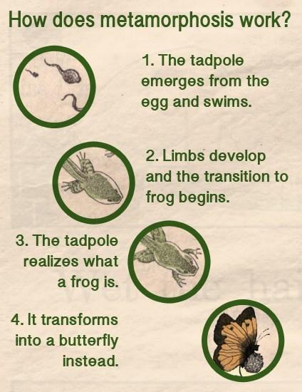 butterfly,tadpole,frog
